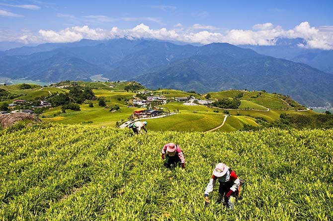 Go back to basics in a farm stay in Taiwan, and help out with the local businesses of the indigenous tribes