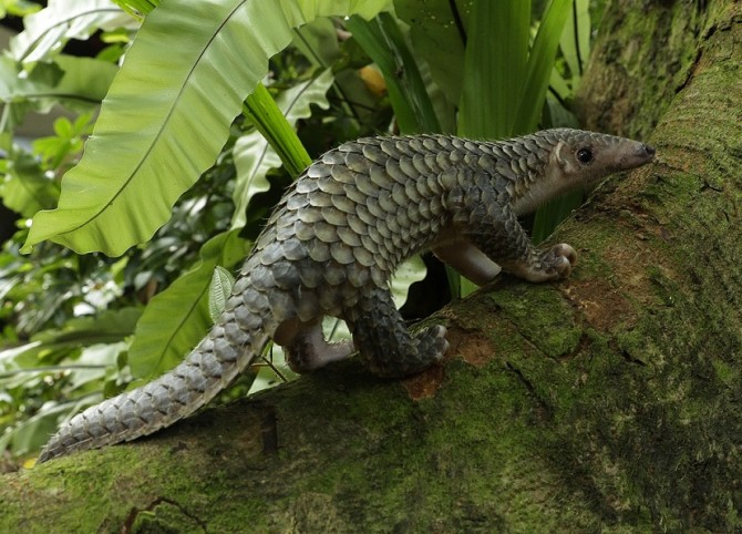 Image 1_Pangolin explores nature_WRS