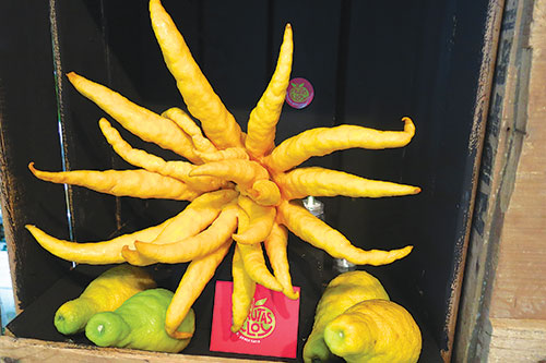 The unusual citron with octopus-like tentacles