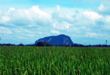 The serene view of padi fields and a mountain in a rural area of Kedah Photo: Mh, Wikipedia Commons
