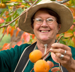 #100_travel_Genuinely-Southern-Forests---Persimmon_cver