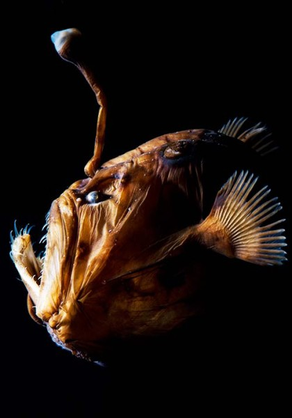 Catch monstrous yet magical deep sea creatures like Murray's abyssal anglerfish on display at The Deep (Photo: Marina Bay Sands)