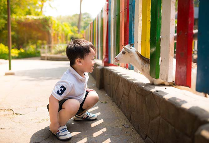 Spend an afternoon cuddling up to adorable animals at Seletar West's Animal Resort
