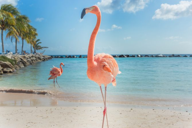 Bask In A Tropical Mood On The Ss Of Flamingo Beach As You Party With Pretty Pink Creatures